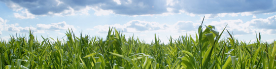 Setting up for Success with Cover Crops – Two August Learning to Get Behind