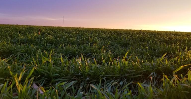 Iowa Seed Corn Cover Crop Initiative Program Successful Season